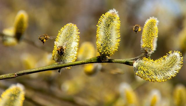 včely u kočiček