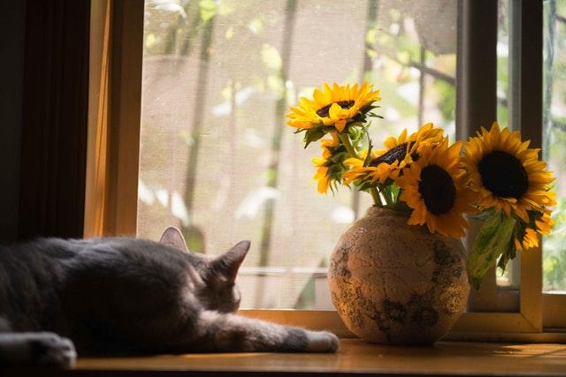 Mačka leží pred oknom a vedľa vázy so žltými kvetmi