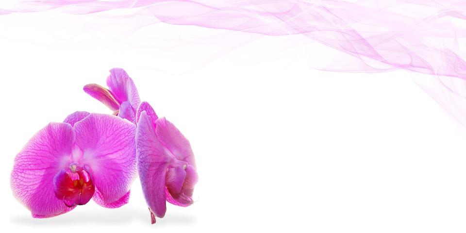 kvet, relax